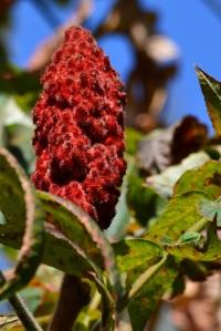Fuzzy fruitsicle