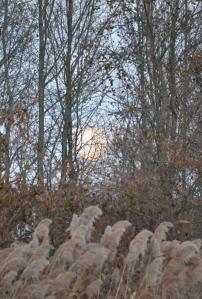 moon (864x1280)