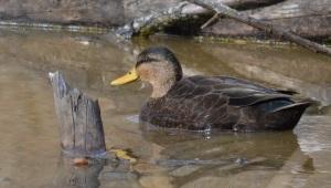Quacker Jack