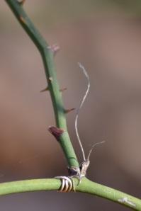 green vine 2
