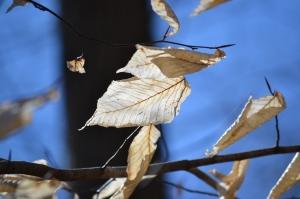 Tree kite