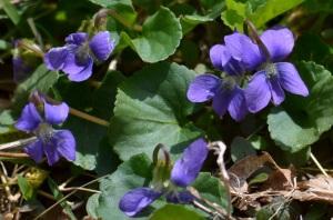 'Lea wore blue violet....'