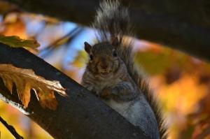 Count squirrelula