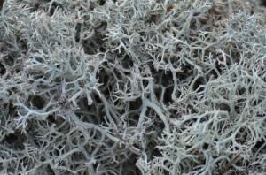 Densely packed dendrites