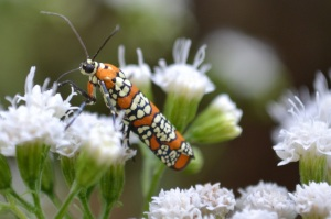 Moth-eatin'