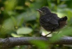Kittenbird