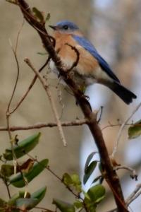 Coldbalt blue